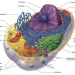 detox mitochondria
